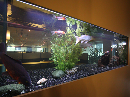Image gallery koi aquarium for Koi tank size